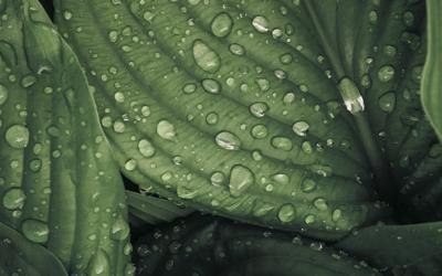 Les hydrolats pour un équilibre subtil des émotions