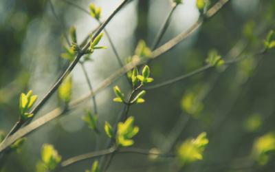 Gemmothérapie spirituelle: 3 bourgeons indispensables au printemps
